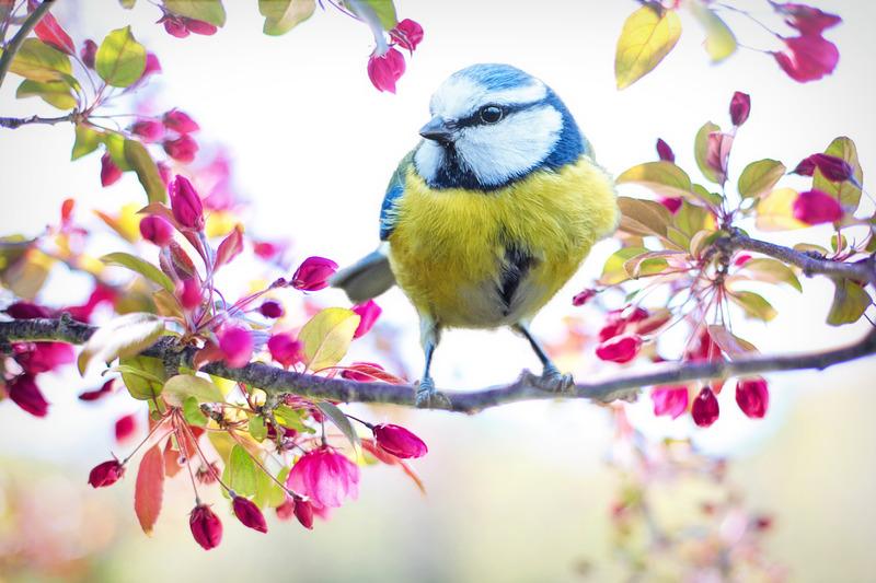 Vogel auf auf Ast mit Blüten - Schubser